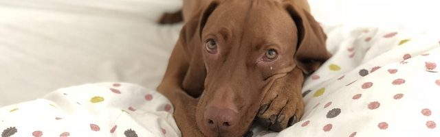 Why Every Puppy Deserves a Comfortable Dog Bed