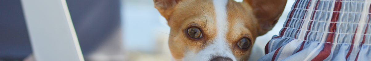 How to Choose an Insurance Policy for Your New Dog